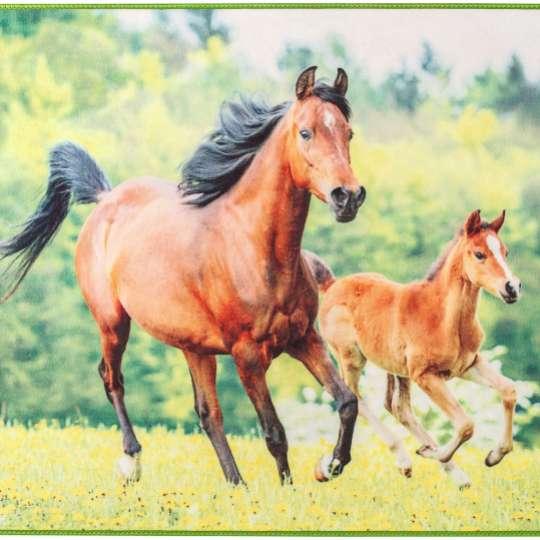 @La-Melle - Fototeppich Pferde