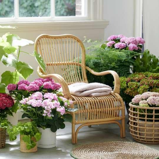 "Hydrangeaworld.com - Wohntrend ""Green Sanctuary"""