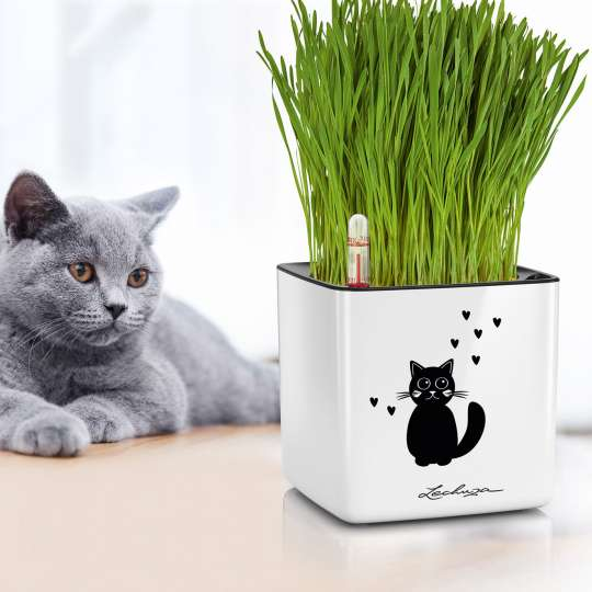 LECHUZA CUBE Glossy 14 Cat weiß mit Katzengras