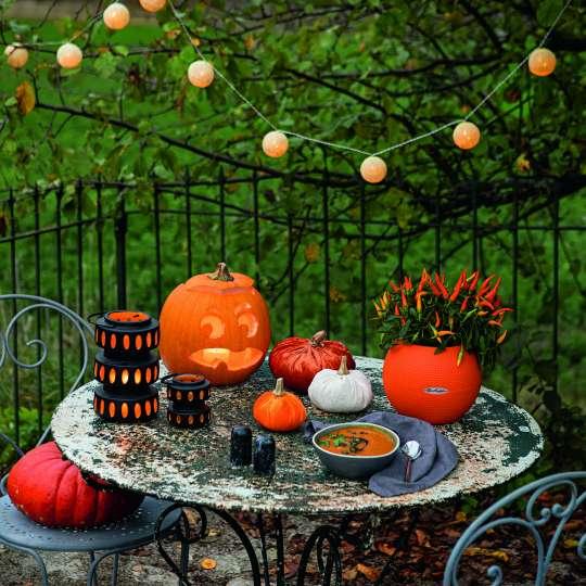 LECHUZA_PURO_20_orange_Capsium_Halloween_Herbst_2020.jpg