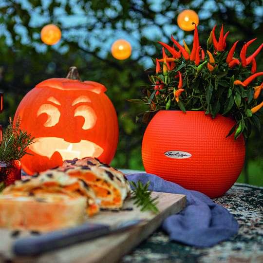 LECHUZA_PURO_20_orange_Capsium_Halloween_Herbst_2020_2.jpg