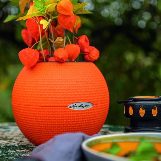 LECHUZA_PURO_20_orange_Physalis_Halloween_Herbst_2020.jpg