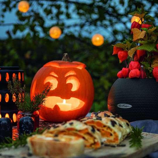 LECHUZA_PURO_20_schwarz_Physalis_Halloween_Herbst_2020.jpg