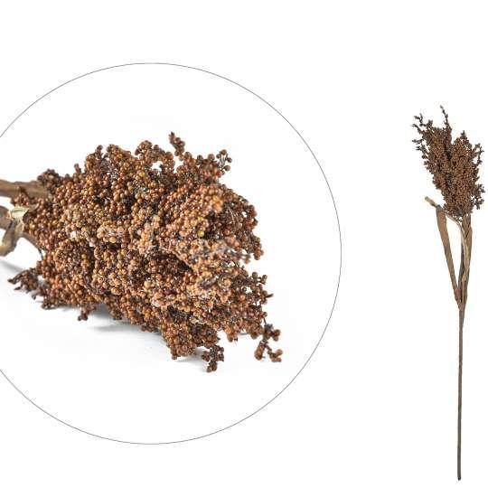 Villa Collection - Pampus Grass Dark