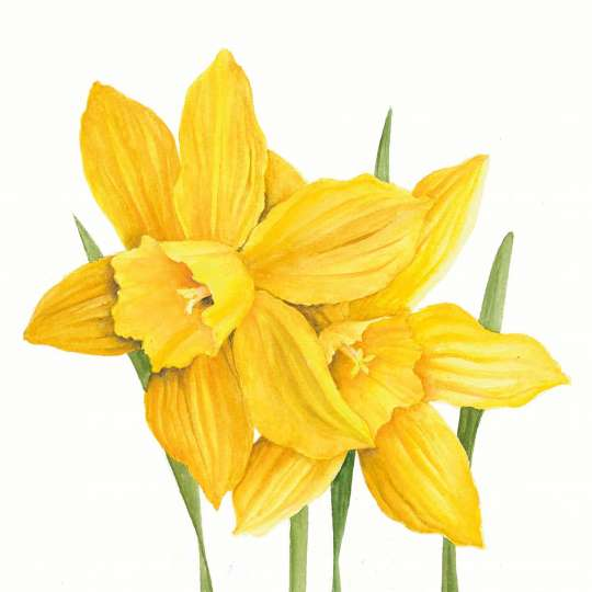 Paperproducts Design Lunchserviette Daffodils – 1333688