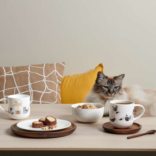 ASA-Coppa-Cats-Dogs-Various-Cats2