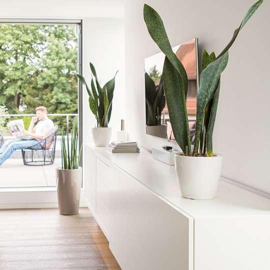 Lechuza: Green up your home! Grün macht glücklich! Classico / Mood 1