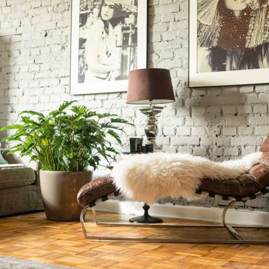 Lechuza: Green up your home! Grün macht glücklich! Classico / Mood 2