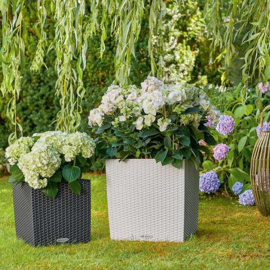 LECHUZA_CUBE_Cottage_30_40_granit_weiss_Hydrangea