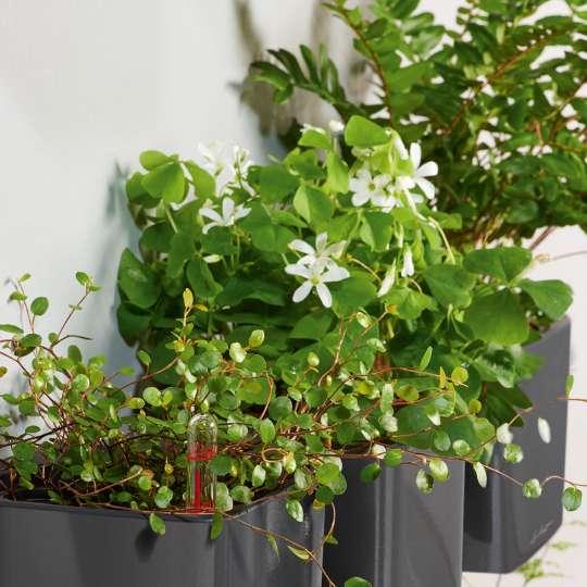 Lechuza Cube Glossy / anthrazit / Mood mit Pflanzen