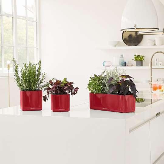 Lechuza Cube Glossy14 Triple scarlet rot Vase, Kräuterkasten