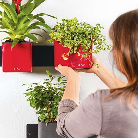 Lechuza Cube Glossy / scarlet rot / Mood Beflanzung