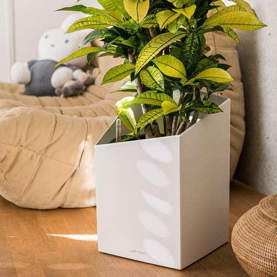 Lechuza: Green up your home! Grün macht glücklich! Cursivo 30, weiss