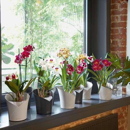 Lechuza Orchidea 8 weiss anthrazit Vase