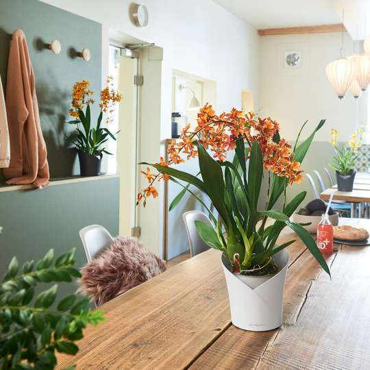 Lechuza Orchidea weiss Vase