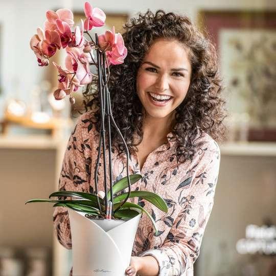 Lechuza Orchidea weiss Phalaenopsis Vase