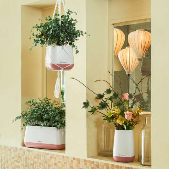 Lechuza Yula pearlrose Eukalyptus Pflanzgefäße in der Wohnung