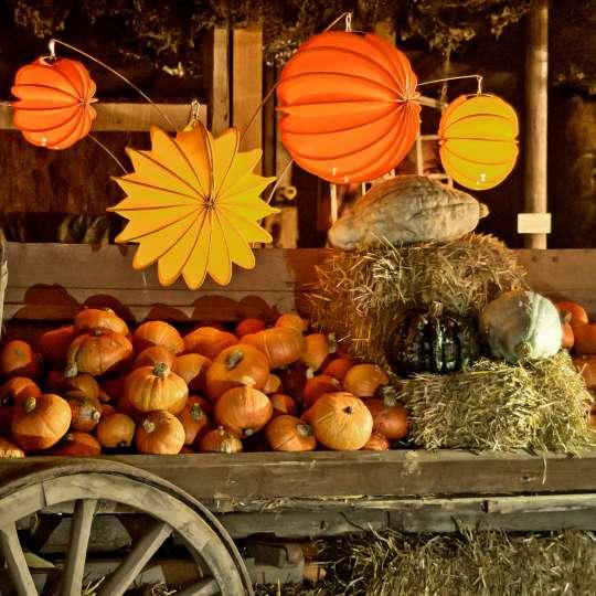 Barlooon: der wetterfeste Lampion, orange, dekoriert mit Kürbissen / Mood 3