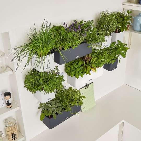 Viel Platz für Frische: Green Wall Home Kit