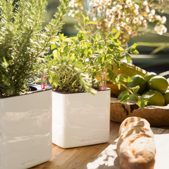 Lechuza-Pflanzengefäß CUBE Glossy