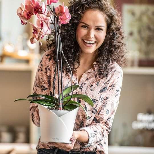 Volle  Pracht  voraus  mit  Orchidea